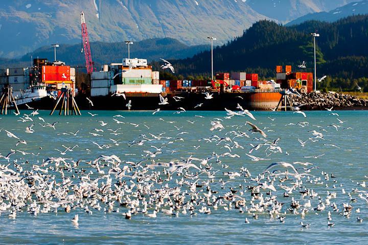 Alaska-Seward-boat-Thurs-1