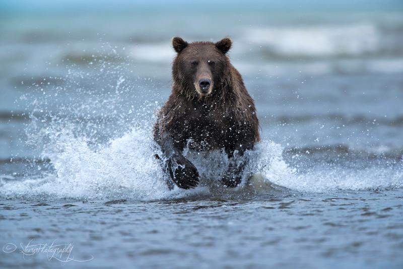 It's a wild world - Lake Clark NP, AK 2012