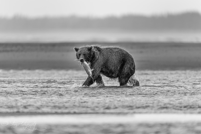 Catch of the day - Lake Clark NP, AK 2012