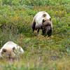 Alaska-Denali-Park-Fri-86