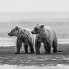 Brotherhood - Lake Clark NP,  AK 2012