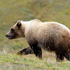 Alaska-Denali-Park-Fri-129
