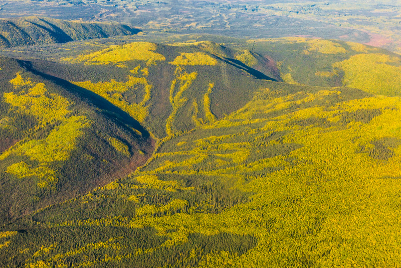 "An aerial view of the boreal forest somewhere north of Fairbanks in early September.  <div class=""ss-paypal-button"">Filename: AKA-13-3929-42.jpg</div><div class=""ss-paypal-button-end""></div>"