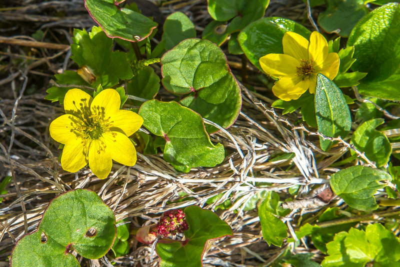 "An assortment of wild flowers flourish during the brief summer on Alaska's north slope.  <div class=""ss-paypal-button"">Filename: AKA-14-4218-031.jpg</div><div class=""ss-paypal-button-end""></div>"
