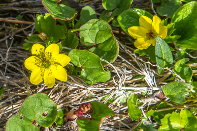 An assortment of wild flowers flourish during the brief summer on Alaska's north slope.  Filename: AKA-14-4218-031.jpg