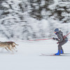 "Members of the Alaska Skijor &amp; Pulk Association race on the UAF ski trails during a scheduled event in Feb., 2013.  <div class=""ss-paypal-button"">Filename: AKA-13-3731-73.jpg</div><div class=""ss-paypal-button-end"" style=""""></div>"