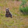 "Photos were taken during three days in August, 2010 within Denali National Park and Preserve.  <div class=""ss-paypal-button"">Filename: AKA-10-2849-044.jpg</div><div class=""ss-paypal-button-end"" style=""""></div>"