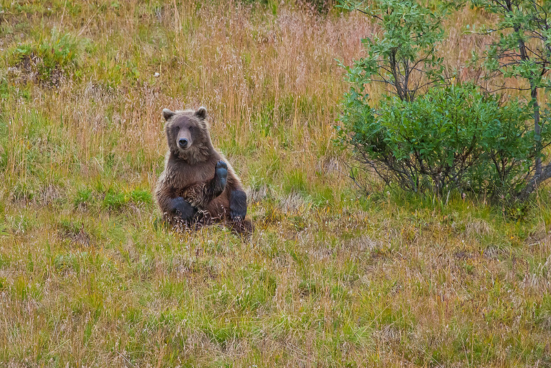 """Photos were taken during three days in August, 2010 within Denali National Park and Preserve.  <div class=""""ss-paypal-button"""">Filename: AKA-10-2849-044.jpg</div><div class=""""ss-paypal-button-end"""" style=""""""""></div>"""