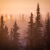 "A golden glow from the rises sun is seen over the horizon on a November morning in Fairbanks.  <div class=""ss-paypal-button"">Filename: AKA-12-3631-4.jpg</div><div class=""ss-paypal-button-end"" style=""""></div>"