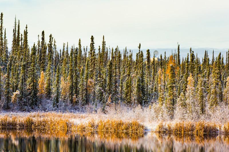 "A fresh September snowfall sticks to the trees near Ballaine Lake on the Fairbanks campus.  <div class=""ss-paypal-button"">Filename: AKA-13-3949-31.jpg</div><div class=""ss-paypal-button-end"" style=""""></div>"