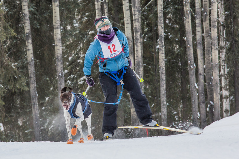 "Members of the Alaska Skijor & Pulk Association race on the UAF ski trails during a scheduled event in Feb., 2013.  <div class=""ss-paypal-button"">Filename: AKA-13-3731-107.jpg</div><div class=""ss-paypal-button-end"" style=""""></div>"