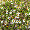"""An assortment of wild flowers flourish during the brief summer on Alaska's north slope.  <div class=""""ss-paypal-button"""">Filename: AKA-14-4218-120.jpg</div><div class=""""ss-paypal-button-end""""></div>"""