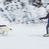 "Members of the Alaska Skijor & Pulk Association race on the UAF ski trails during a scheduled event in Feb., 2013.  <div class=""ss-paypal-button"">Filename: AKA-13-3731-66.jpg</div><div class=""ss-paypal-button-end"" style=""""></div>"
