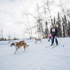 """Members of the Alaska Skijor & Pulk Association race on the UAF ski trails during a scheduled event in Feb., 2013.  <div class=""""ss-paypal-button"""">Filename: AKA-13-3731-98.jpg</div><div class=""""ss-paypal-button-end"""" style=""""""""></div>"""