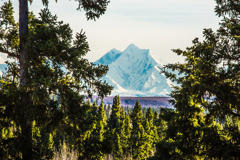 "Mt. Hayes is framed by spruce trees near Delta Junction, Alaska.  <div class=""ss-paypal-button"">Filename: AKA-13-3845-138.jpg</div><div class=""ss-paypal-button-end"" style=""""></div>"