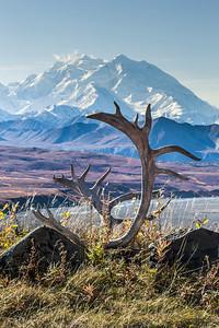 Mt. McKinley is North American's highest peak.  Filename: AKA-13-3942-151.jpg