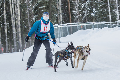 Members of the Alaska Skijor & Pulk Association race on the UAF ski trails during a scheduled event in Feb., 2013.  Filename: AKA-13-3731-115.jpg