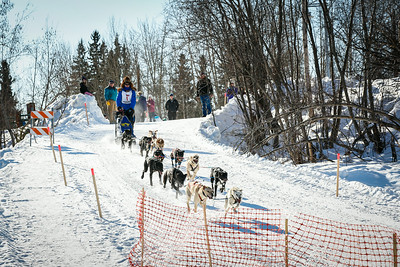 Associate Professor and Associate Dean of Veterinary Medicine Arleigh Reynolds flies down the ramp to the Chena River during the 2014 Open North American Sled Dog Race in downtown Fairbanks.  Filename: AKA-14-4120-27.jpg