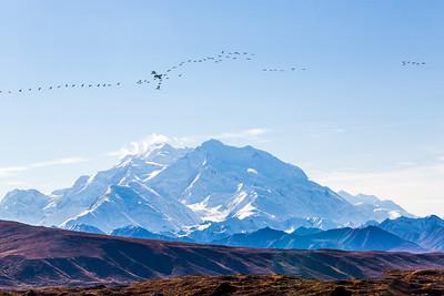 Mt. McKinley is North American's highest peak.  Filename: AKA-13-3942-186.jpg
