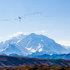 "Mt. McKinley is North American's highest peak.  <div class=""ss-paypal-button"">Filename: AKA-13-3942-186.jpg</div><div class=""ss-paypal-button-end"" style=""""></div>"