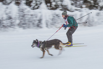 Members of the Alaska Skijor & Pulk Association race on the UAF ski trails during a scheduled event in Feb., 2013.  Filename: AKA-13-3731-83.jpg