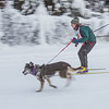 "Members of the Alaska Skijor &amp; Pulk Association race on the UAF ski trails during a scheduled event in Feb., 2013.  <div class=""ss-paypal-button"">Filename: AKA-13-3731-83.jpg</div><div class=""ss-paypal-button-end"" style=""""></div>"
