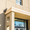 """A great horned owl takes a morning break on the awning above the front doors of the Chapman Building on the Fairbanks campus.  <div class=""""ss-paypal-button"""">Filename: AKA-13-3792-81.jpg</div><div class=""""ss-paypal-button-end"""" style=""""""""></div>"""