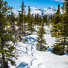 "Snowshoe tracks wind through a stretch of boreal forest near the Black Rapids Lodge about 40 miles south of Delta Junction.  <div class=""ss-paypal-button"">Filename: AKA-13-3845-90.jpg</div><div class=""ss-paypal-button-end"" style=""""></div>"