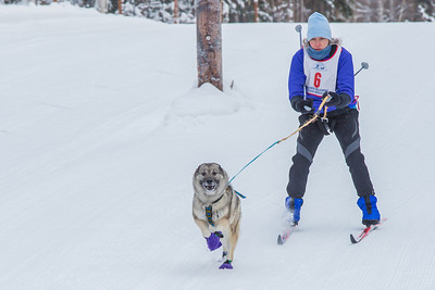 Members of the Alaska Skijor & Pulk Association race on the UAF ski trails during a scheduled event in Feb., 2013.  Filename: AKA-13-3731-34.jpg