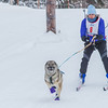"Members of the Alaska Skijor & Pulk Association race on the UAF ski trails during a scheduled event in Feb., 2013.  <div class=""ss-paypal-button"">Filename: AKA-13-3731-34.jpg</div><div class=""ss-paypal-button-end"" style=""""></div>"