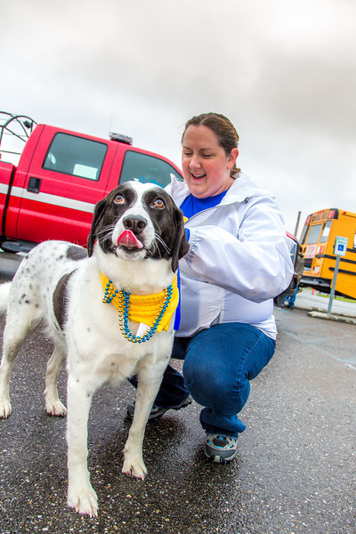 """More than 200 UAF students, staff, faculty and administrators turned out to participate in the 2013 Golden Days parade through downtown Fairbanks.  <div class=""""ss-paypal-button"""">Filename: AKA-13-3886-44.jpg</div><div class=""""ss-paypal-button-end"""" style=""""""""></div>"""