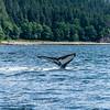 White Whale Tail