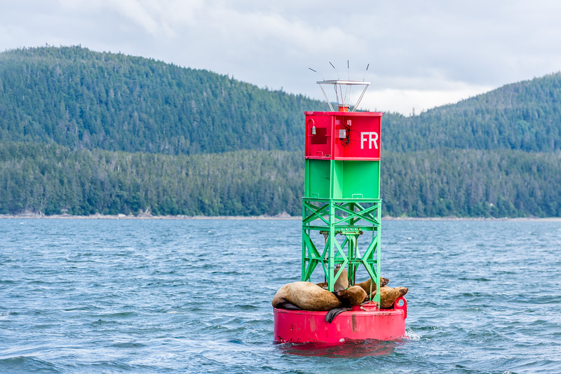 Harbor Seals on a Buoy