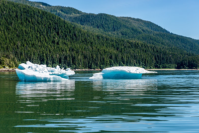 Spruce Pine Forests & Icebergs