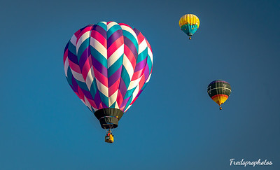 balloons at Festival - -143