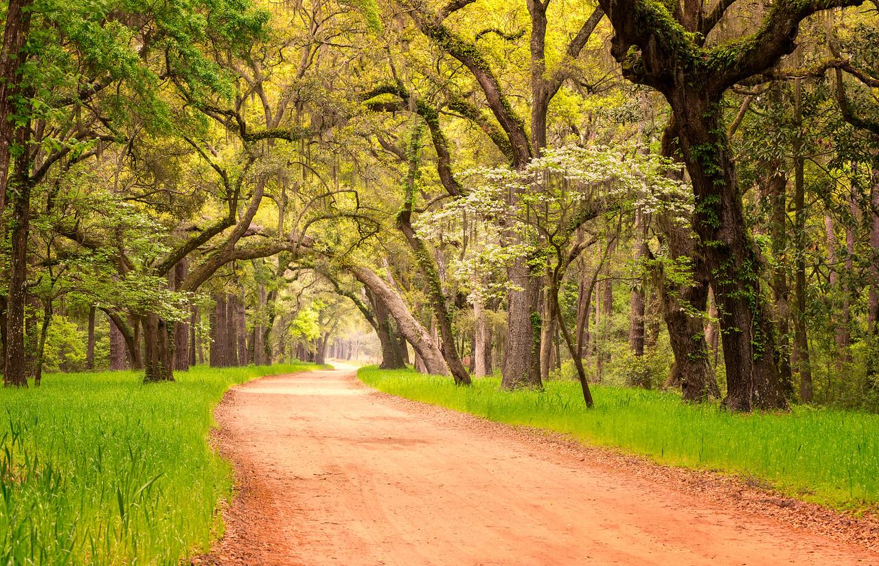 Enchanted Lane