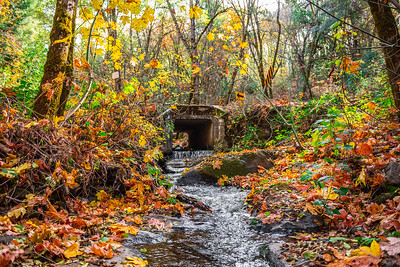 Autumn image of a creek flowing underneath a road