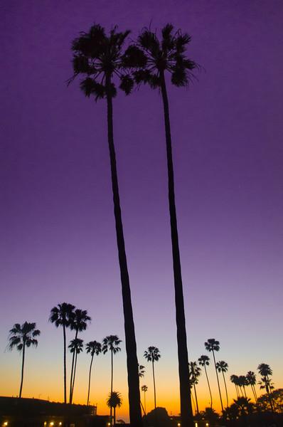 Pair of Palms
