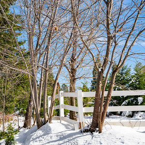 A winter scene with a white fence, snow, and trees.