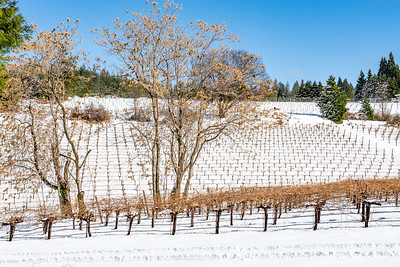 Winter landscape of a snow covered vineyard