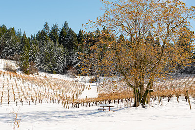 Winter landscape of a snowy vineyard