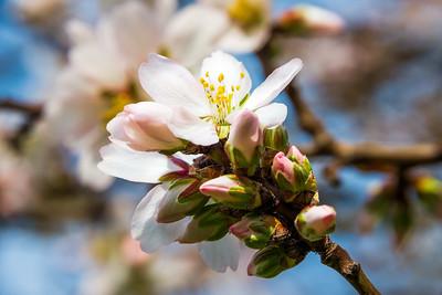 Tree Blooms