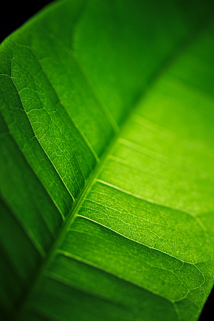 Leaf Mantras