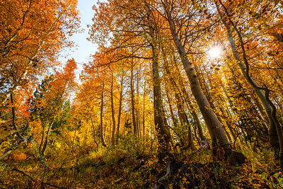 An Autumn forest of trees changing colors with sunlight shining through.