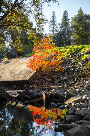 Image of fall colors in a drainage canal