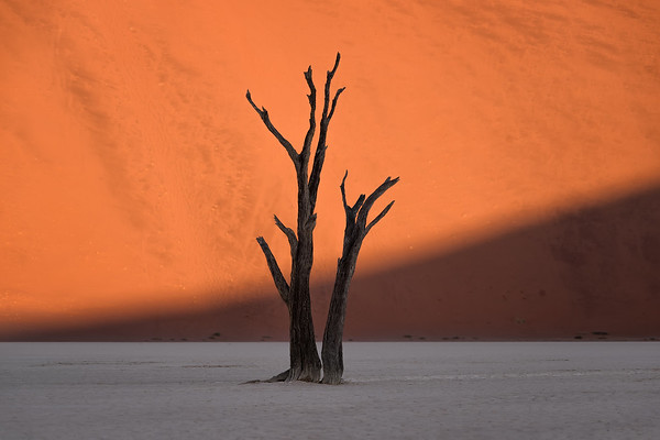 Photograph: Half Light - The sun strikes the bright orange sand dunes behind the skeleton of dead tree in Deadvlei, Namibia.