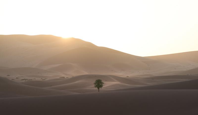 Saharan Oasis