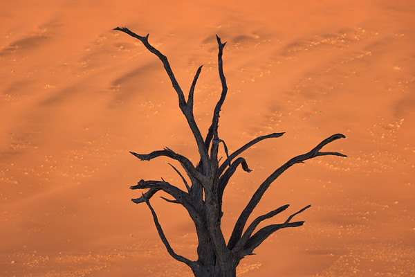 Photograph: Bones In The Sand - A dead acacia tree against the sunlit sands of Deadvlei in Namibia during sunrise.