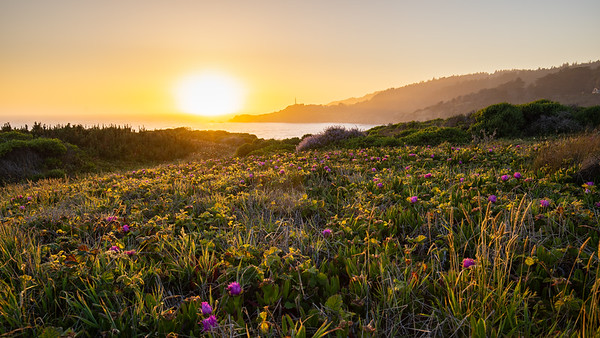 Coastal Meadow Sunset