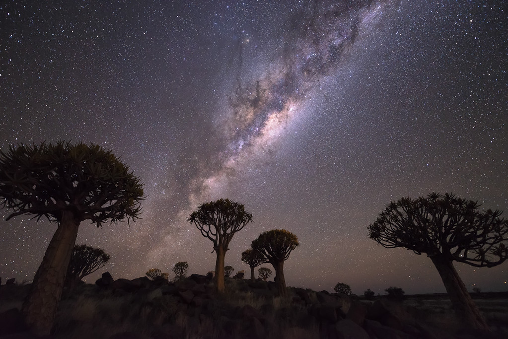Photograph: Quiver Tree Forest - Quiver trees (Kokerbooms) under the Milky Way in Southern Namibia.
